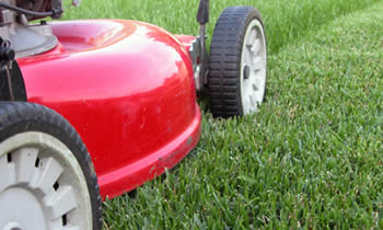 Lawn Care in Fort Lauderdale FL Lawn Care Services in Fort Lauderdale FL Quality Lawn Care in Fort Lauderdale FL
