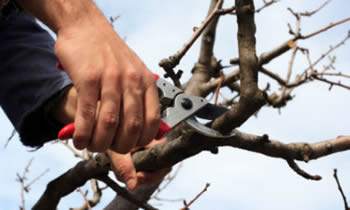 Tree Pruning in Fort Lauderdale FL Tree Pruning Services in Fort Lauderdale FL Quality Tree Pruning in Fort Lauderdale FL