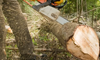 Tree Service in Fort Lauderdale FL Tree Service Estimates in Fort Lauderdale FL Tree Service Quotes in Fort Lauderdale FL Tree Service Professionals in Fort Lauderdale FL
