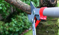 Tree Pruning Services in Fort Lauderdale FL